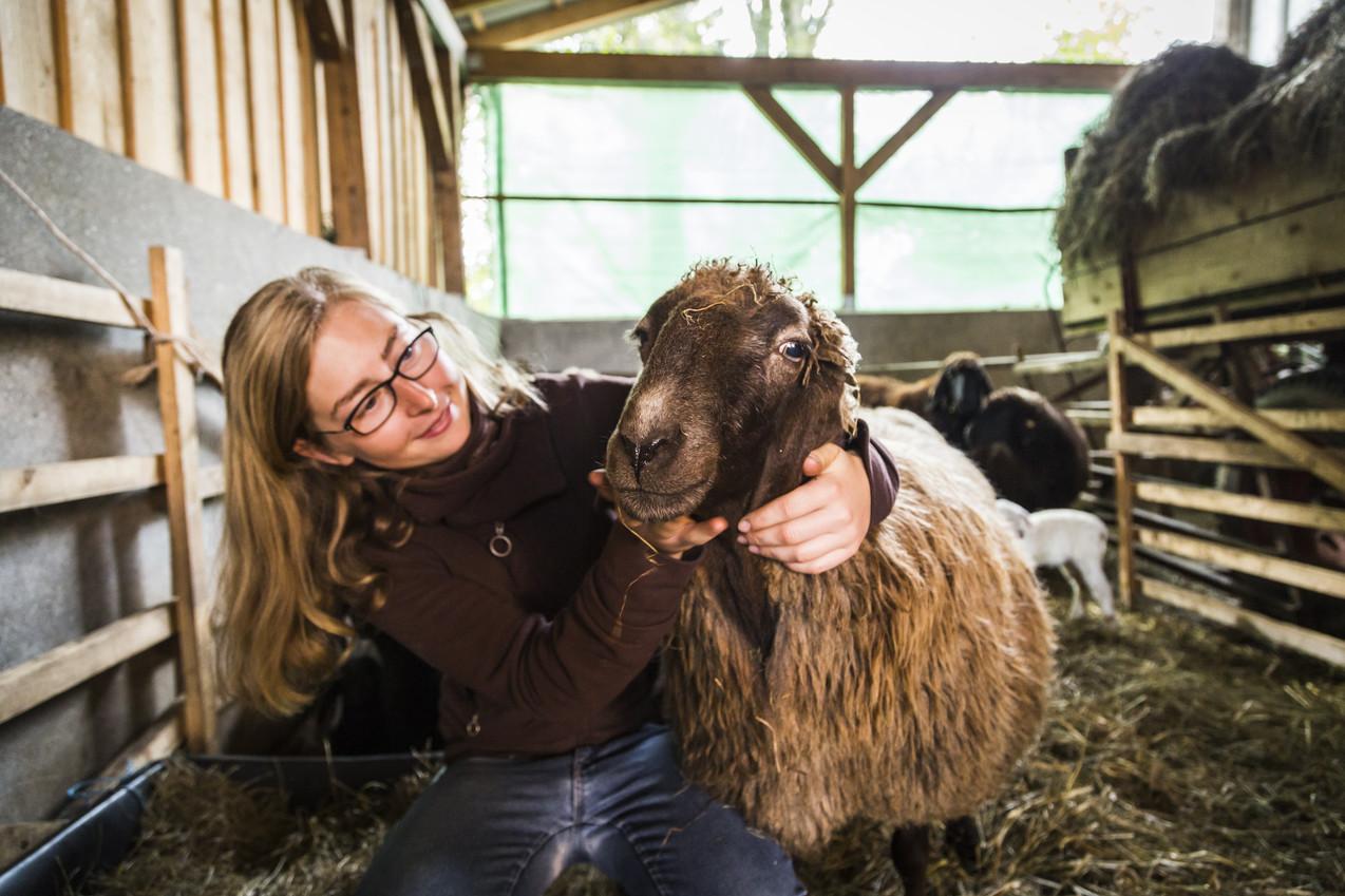 Rent A Schaf